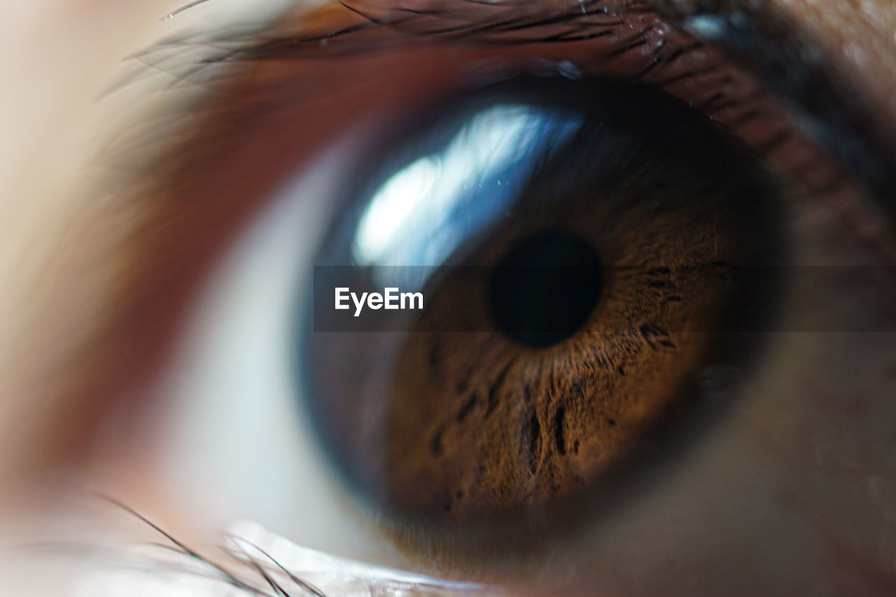 eye, extreme close-up, sensory perception, eyelash, close-up, eyesight, selective focus, one person, body part, human eye, human body part, macro, unrecognizable person, eyeball, iris - eye, indoors, real people, brown, eyelid, eyebrow