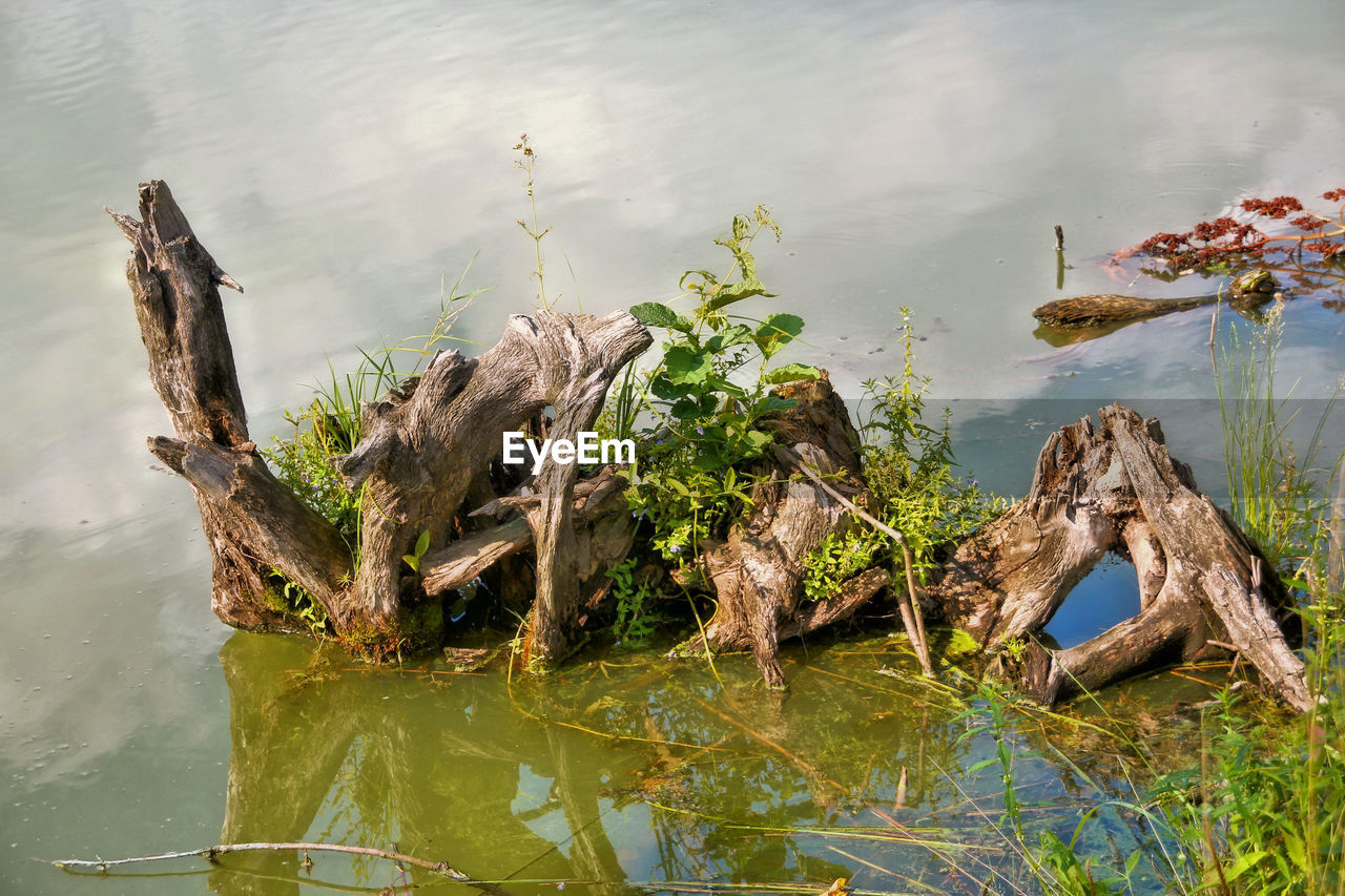 water, lake, waterfront, reflection, no people, nature, day, standing water, animal themes, outdoors, high angle view, animals in the wild, algae, one animal, floating on water, animal wildlife, swimming, beauty in nature, dead tree, mammal