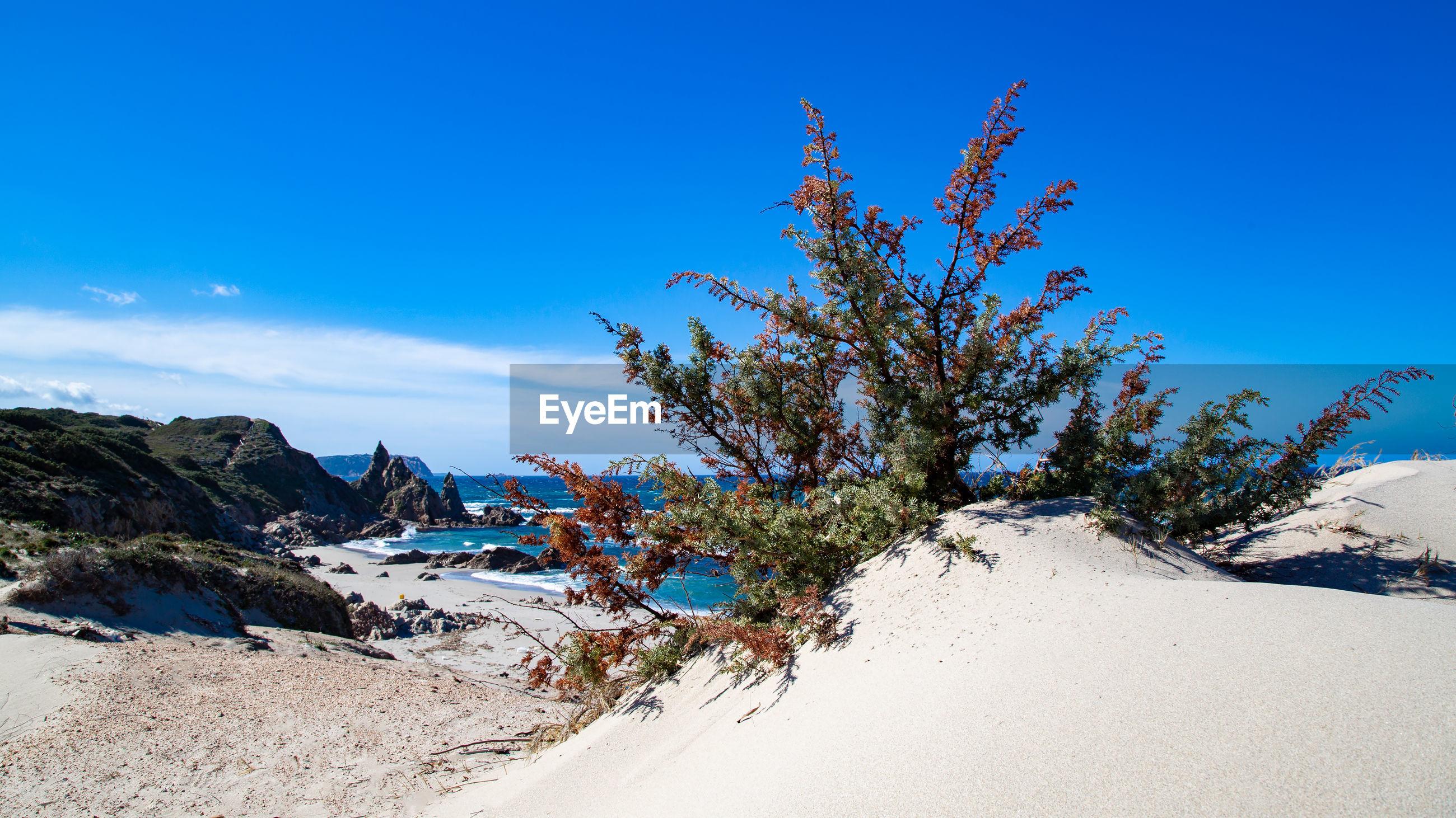 PLANTS ON BEACH AGAINST BLUE SKY