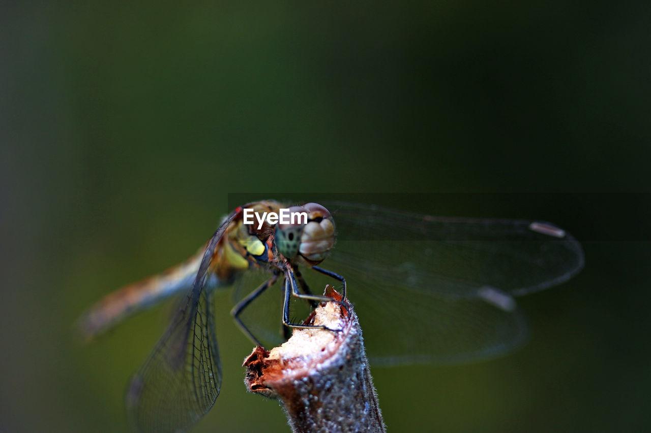 Close-up of damselfly on stick