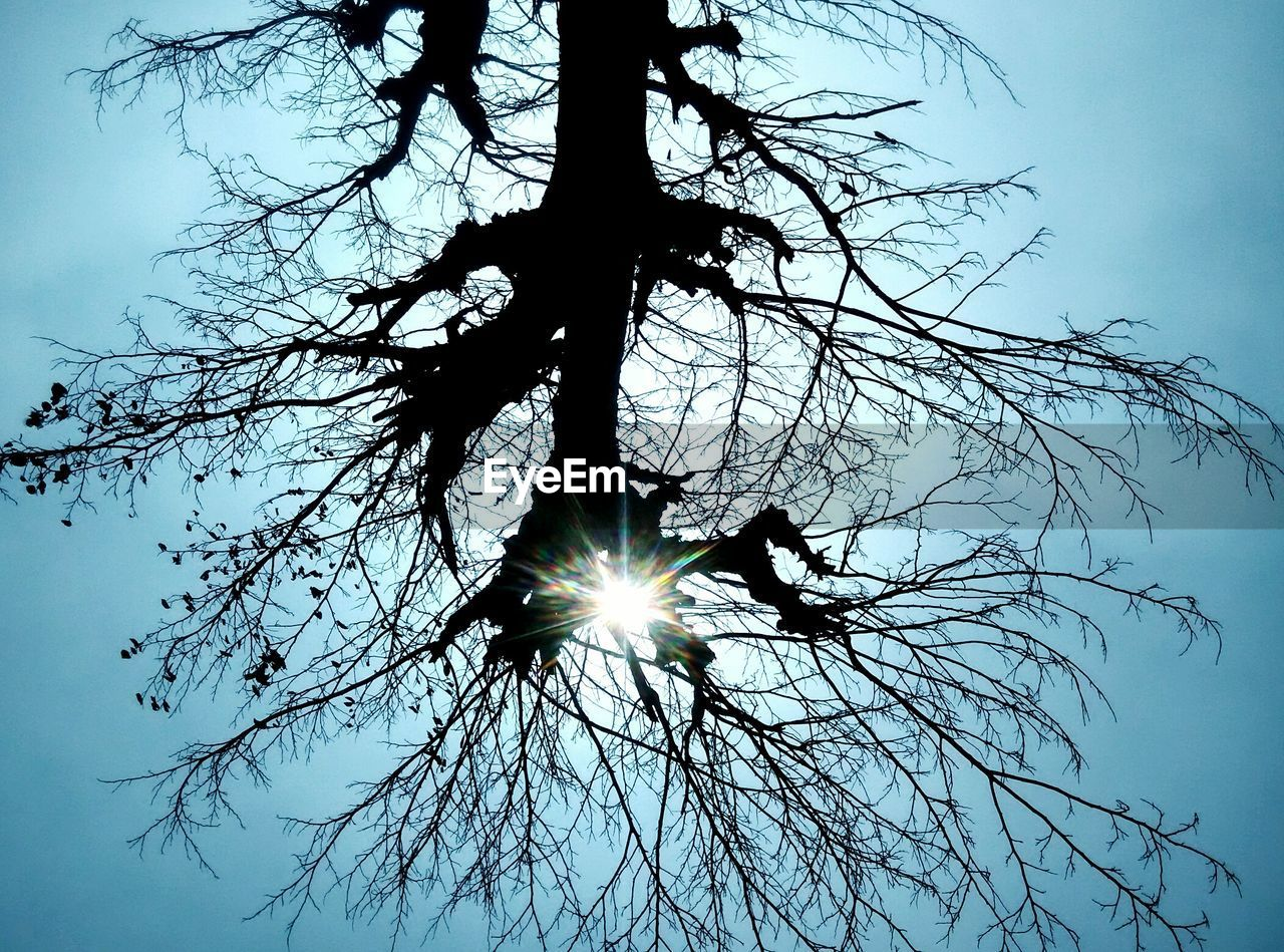 low angle view, lens flare, sun, nature, sky, branch, silhouette, no people, tree, sunlight, outdoors, tranquility, beauty in nature, bare tree, clear sky, day