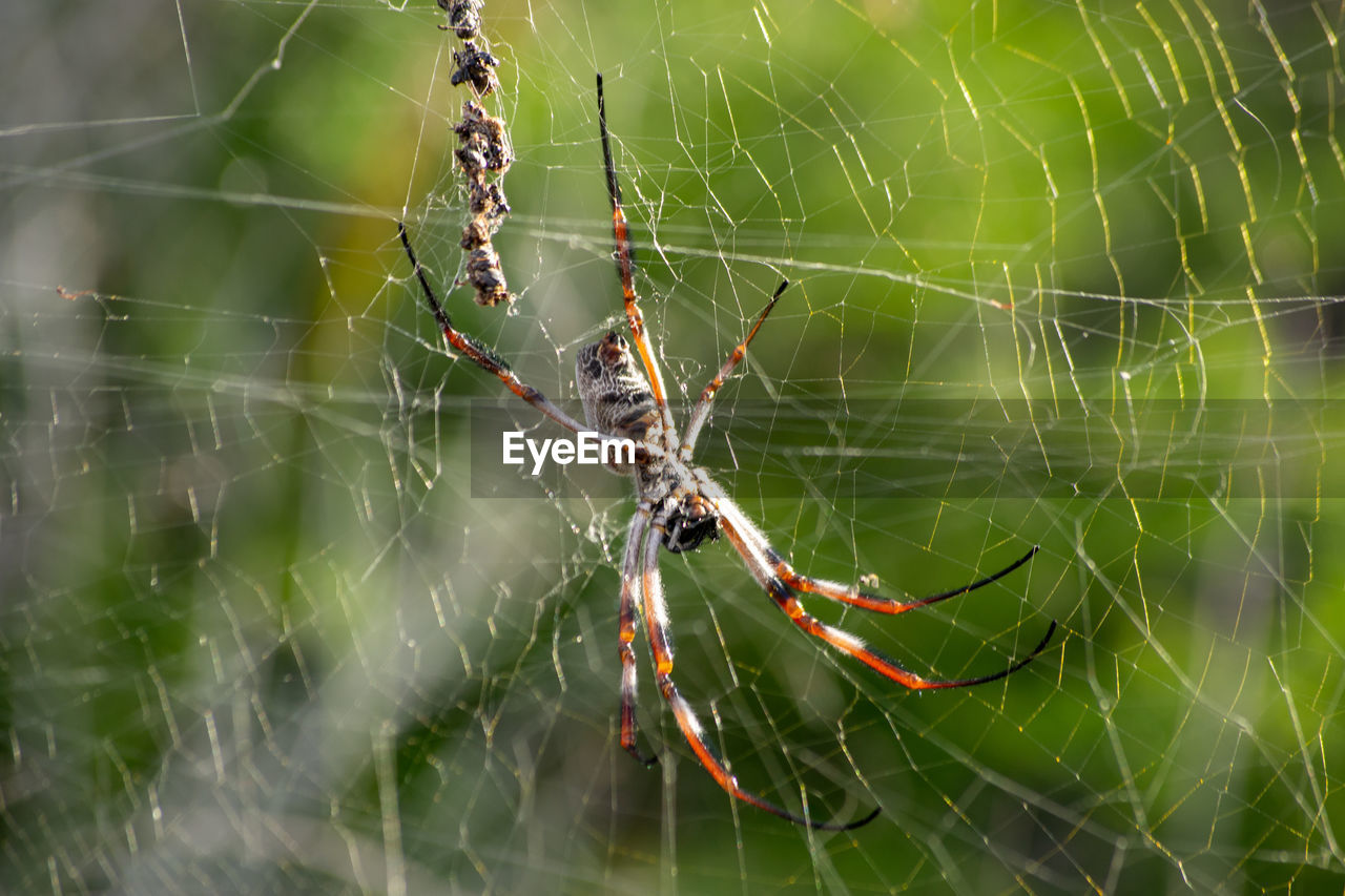 spider web, animal, invertebrate, animal themes, animals in the wild, animal wildlife, fragility, close-up, insect, spider, arachnid, one animal, focus on foreground, arthropod, vulnerability, web, no people, day, nature, complexity, animal leg, outdoors