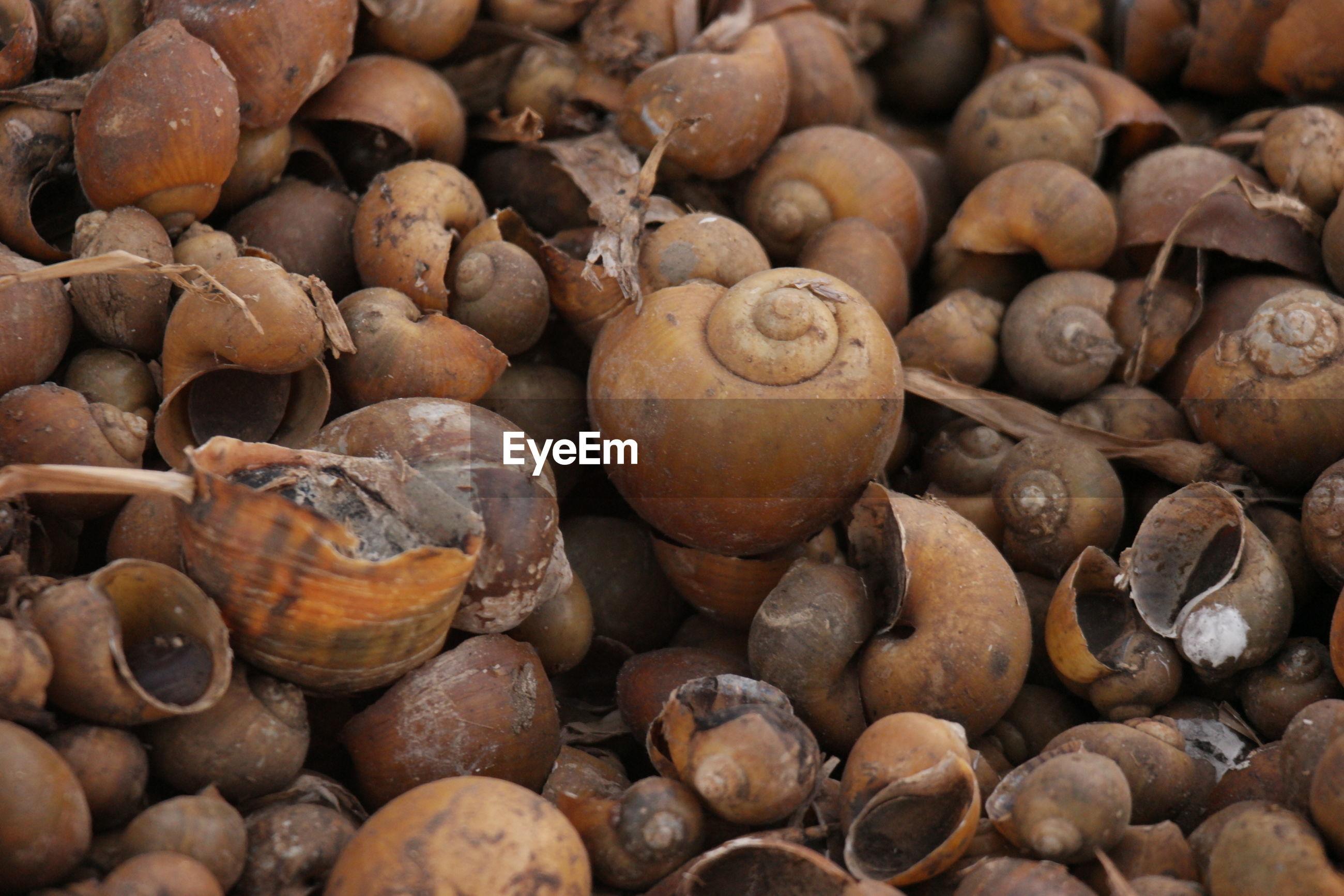 Full frame shot of snail shells