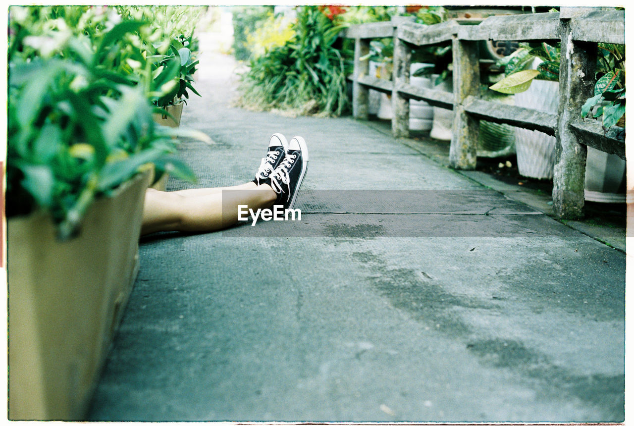 low section, day, real people, human leg, one person, outdoors, plant, close-up, human body part, flower, people