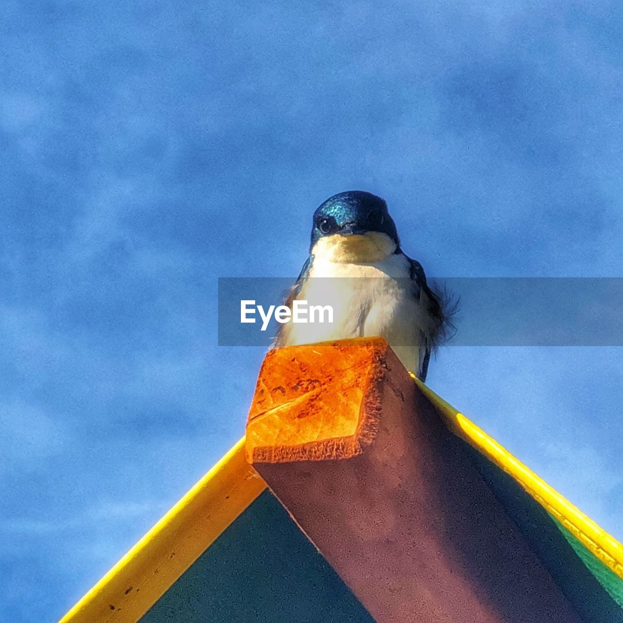 low angle view, sky, one animal, vertebrate, animal, animals in the wild, animal themes, bird, animal wildlife, no people, day, nature, cloud - sky, outdoors, perching, metal, seagull, yellow, blue, close-up