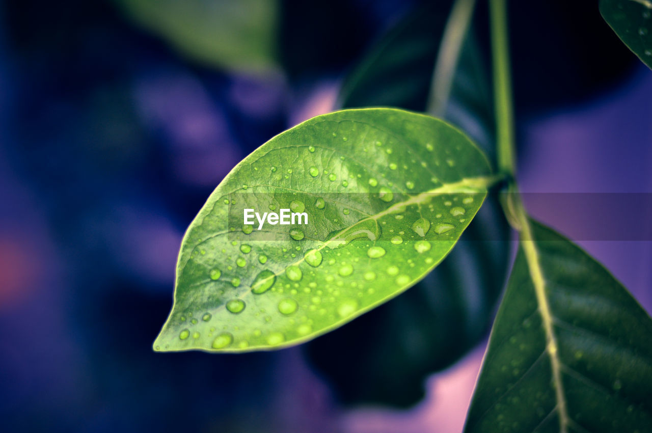 leaf, plant part, green color, close-up, focus on foreground, growth, beauty in nature, water, plant, no people, nature, drop, day, freshness, wet, vulnerability, outdoors, fragility, tranquility, leaves, purity, raindrop, dew