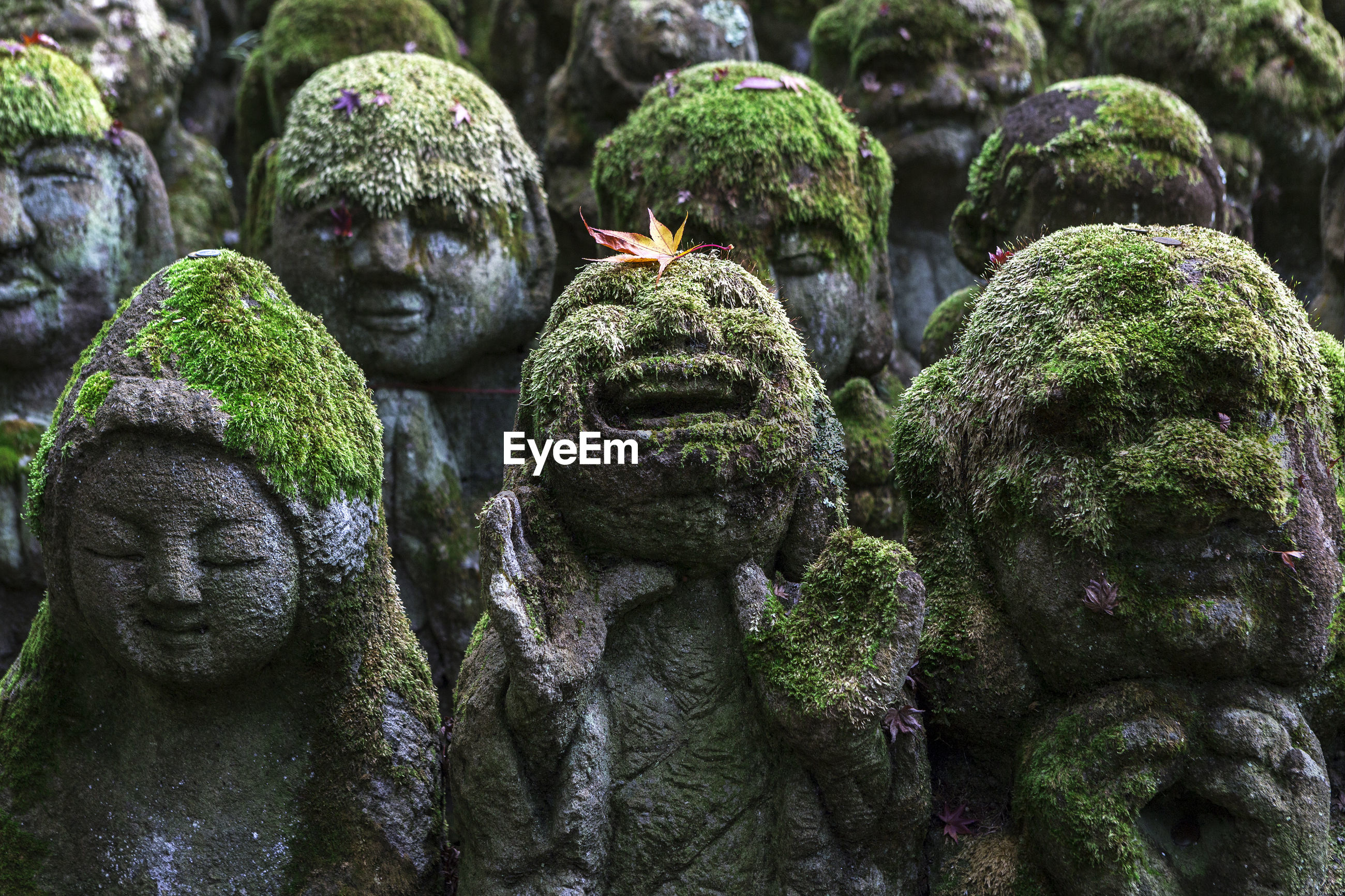 Close-up of mossy statues