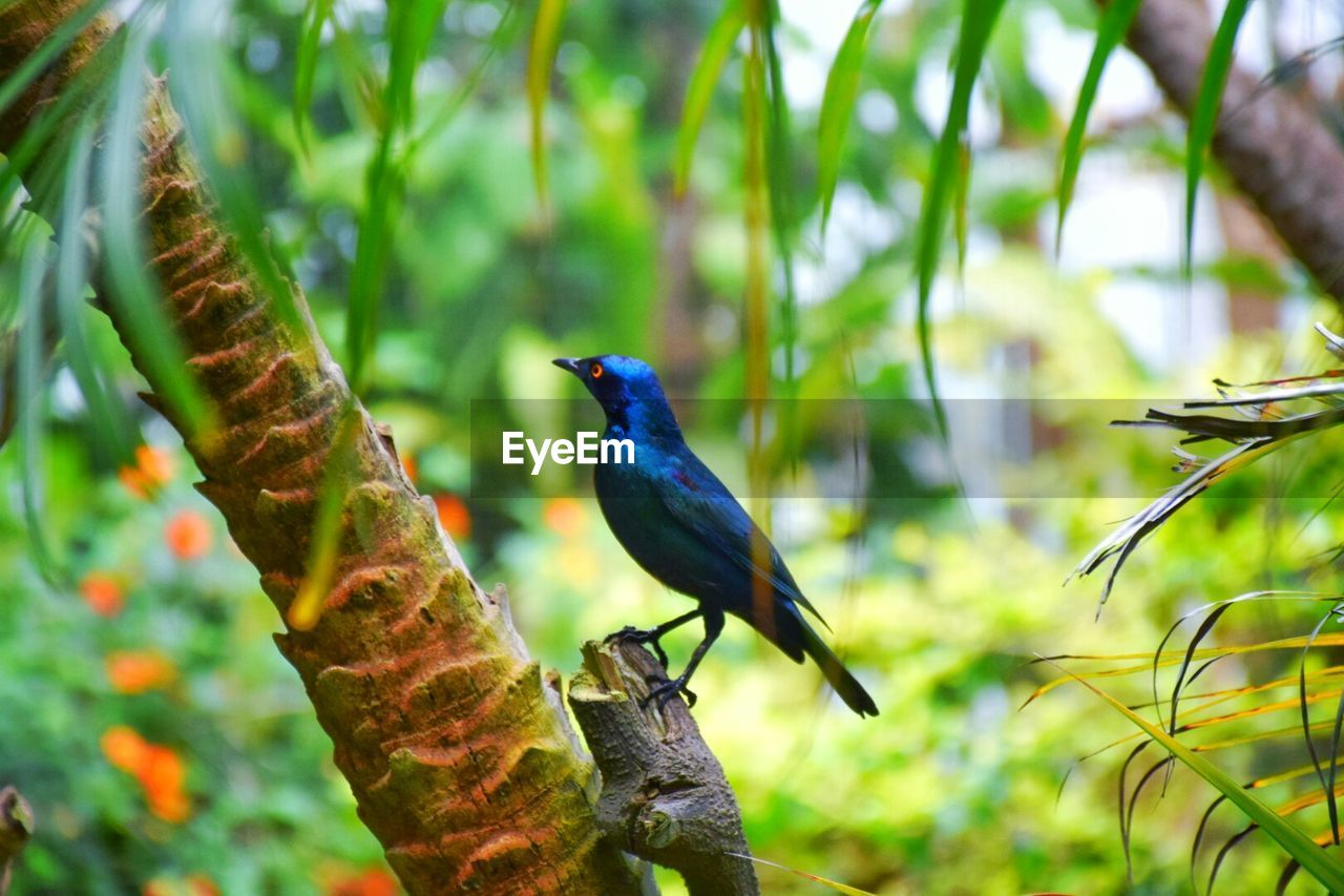 bird, animal themes, animals in the wild, one animal, focus on foreground, perching, day, animal wildlife, growth, no people, nature, outdoors, branch, plant, tree, beauty in nature, close-up