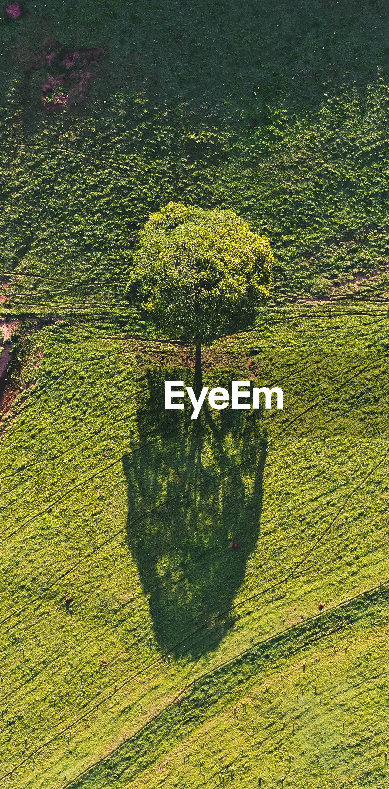 High angle view of tree growing on field