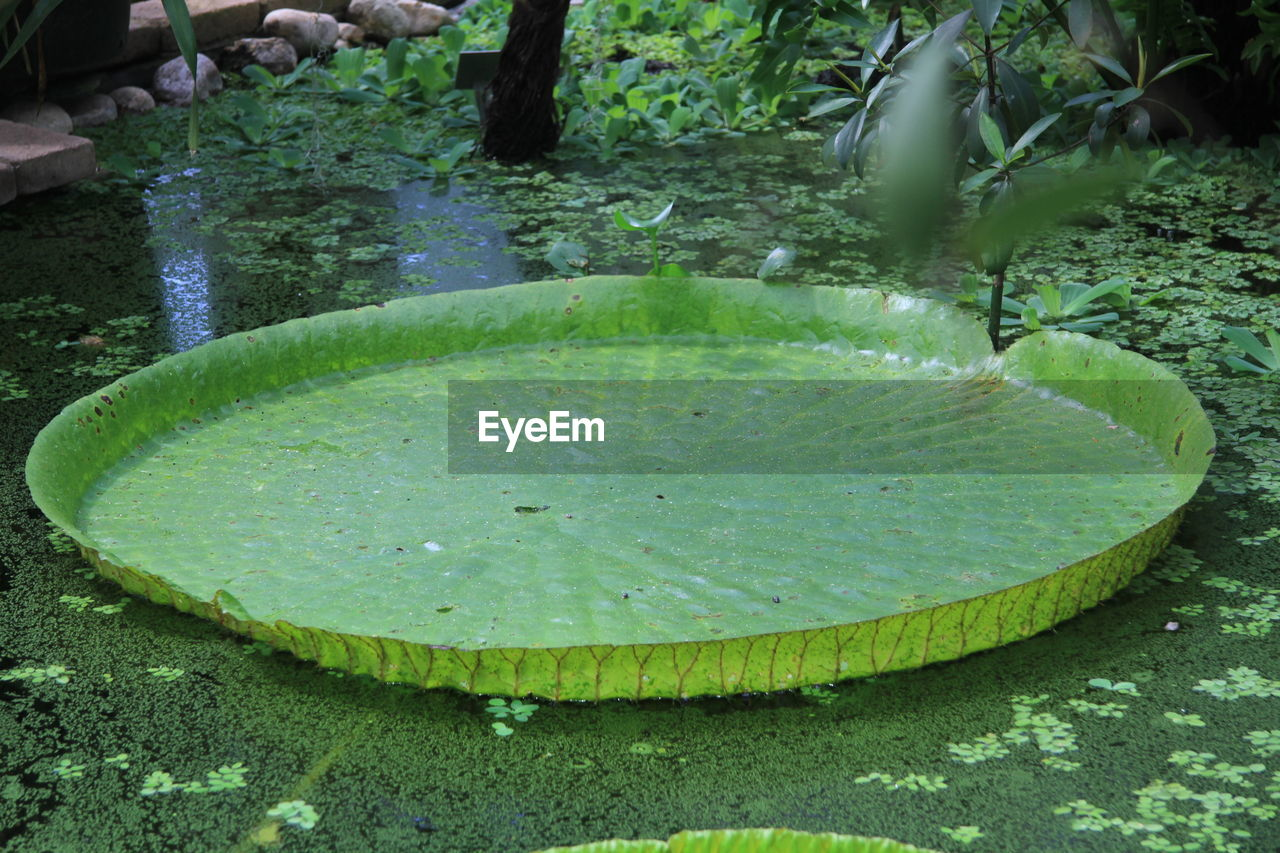 High Angle View Of Lily Pad Floating On Water