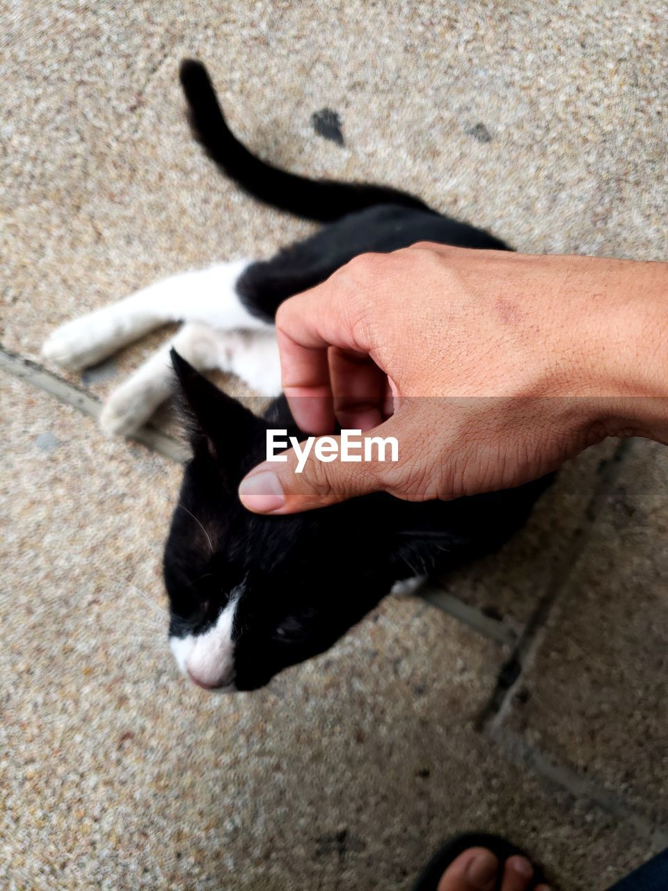 mammal, one animal, domestic, domestic animals, pets, high angle view, human hand, vertebrate, hand, real people, people, human body part, black color, day, animal body part, feline, domestic cat, pet owner, finger