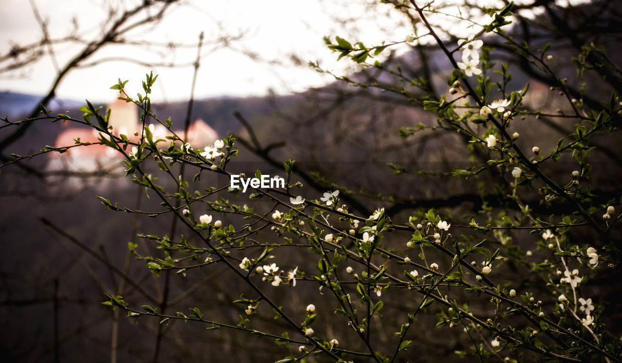 nature, beauty in nature, growth, branch, flower, no people, outdoors, plant, fragility, tree, day, freshness, close-up
