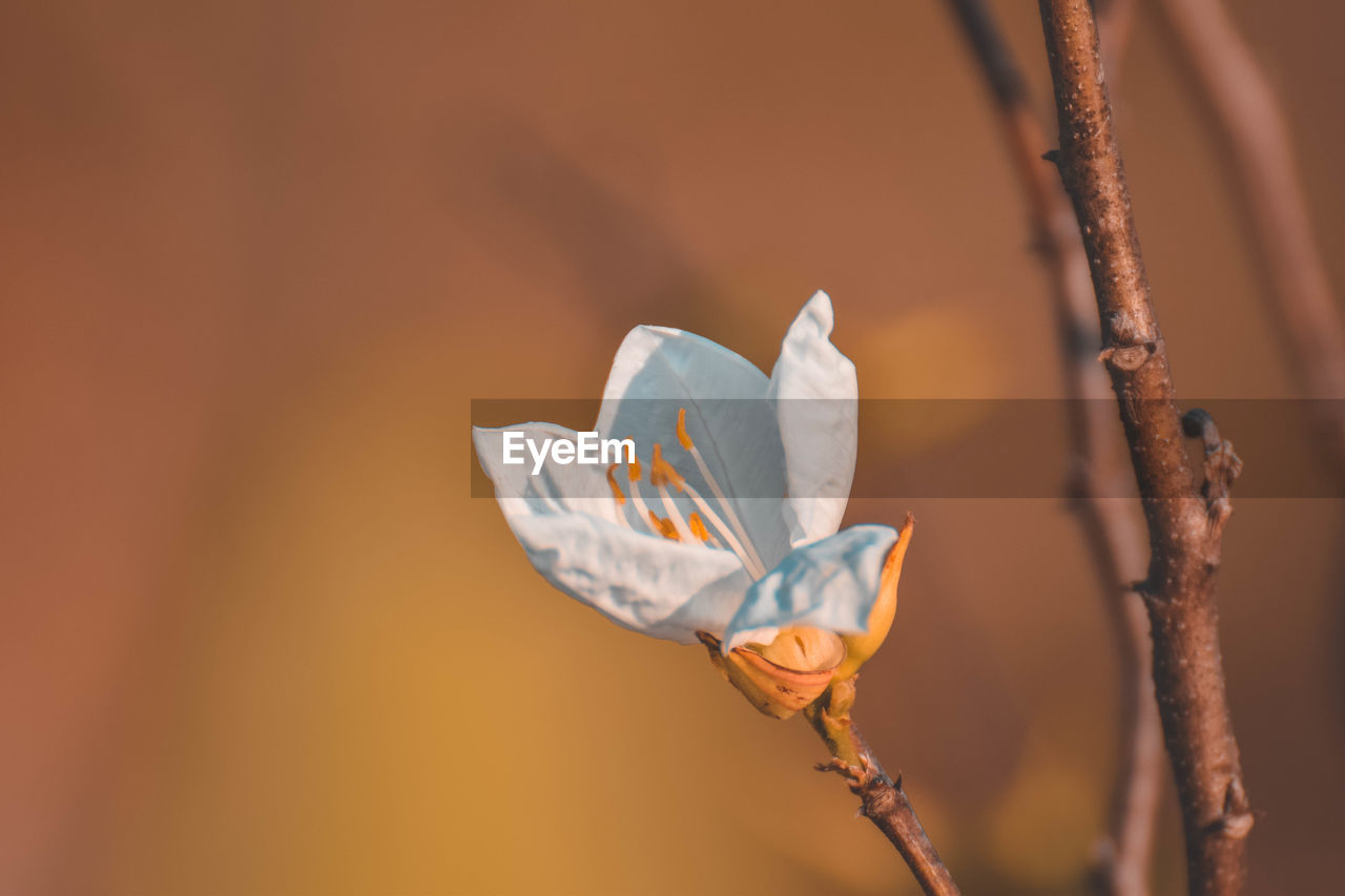 Close-up of white flower on twig