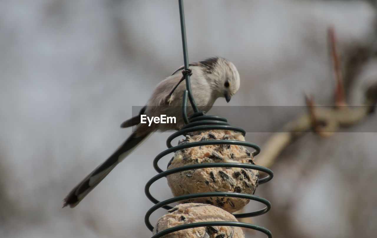 focus on foreground, no people, bird, vertebrate, metal, close-up, animal themes, animals in the wild, animal, day, perching, nature, one animal, outdoors, animal wildlife, selective focus, plant, architecture, built structure, low angle view