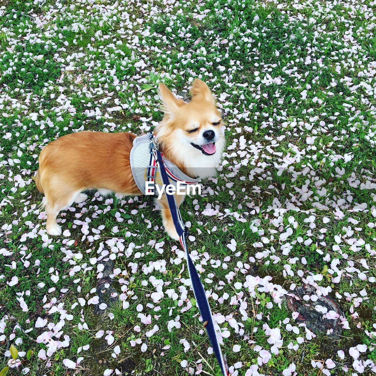 one animal, plant, leash, dog, canine, vertebrate, pets, animal themes, pet leash, mammal, domestic animals, animal, domestic, growth, flower, flowering plant, pet collar, nature, collar, no people, outdoors, mouth open
