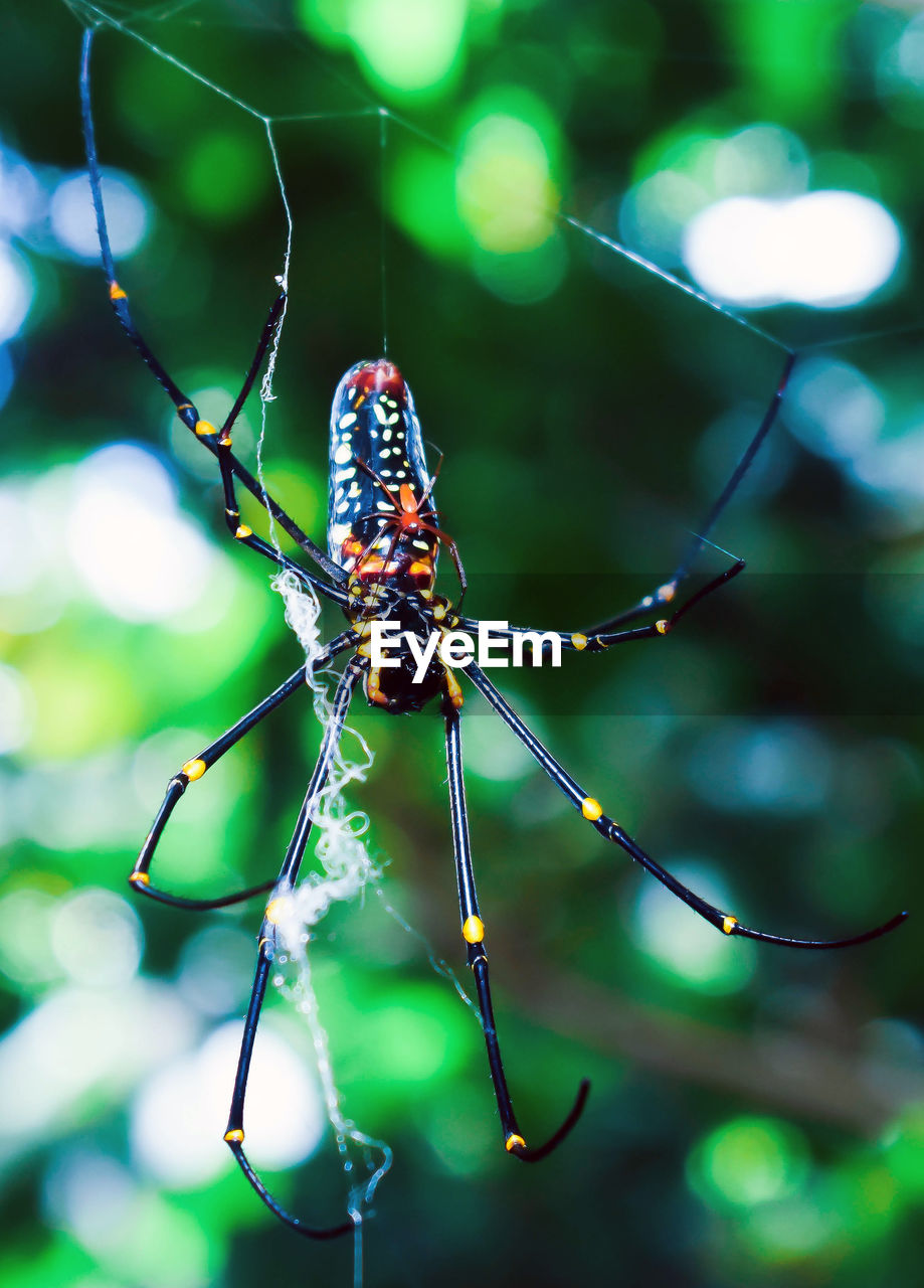 animal themes, animal, animal wildlife, one animal, insect, animals in the wild, invertebrate, close-up, focus on foreground, day, no people, nature, plant, outdoors, fragility, beauty in nature, animal body part, selective focus, spider web, zoology, animal wing, animal leg, butterfly - insect
