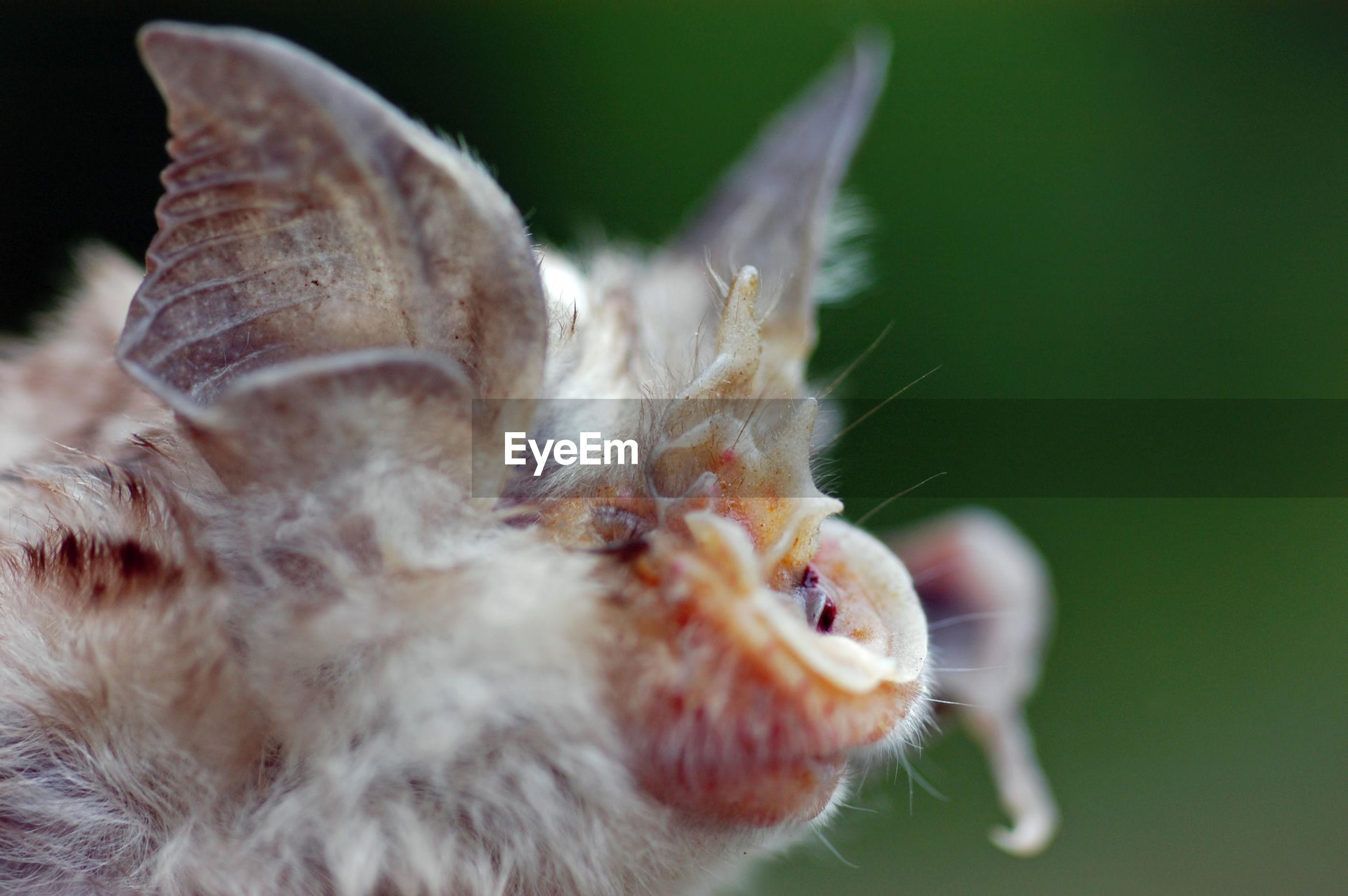 Close-up of bat outdoors