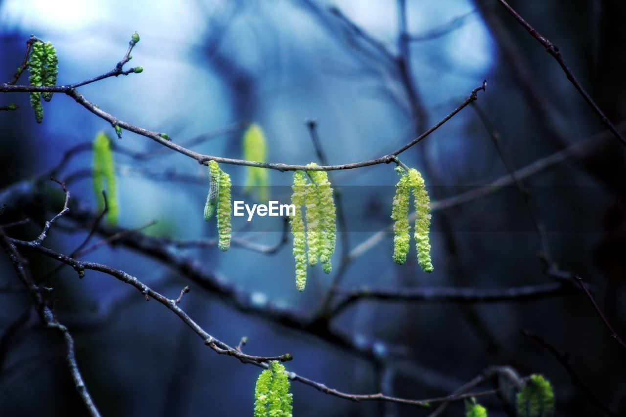 plant, growth, beauty in nature, close-up, nature, focus on foreground, plant part, green color, no people, day, leaf, selective focus, flower, vulnerability, tree, fragility, outdoors, twig, flowering plant, pussy willow