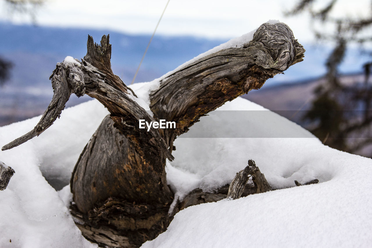 winter, cold temperature, snow, nature, white color, day, tree, beauty in nature, no people, focus on foreground, tranquility, land, wood - material, close-up, wood, non-urban scene, scenics - nature, plant, outdoors, dead plant, driftwood, snowcapped mountain