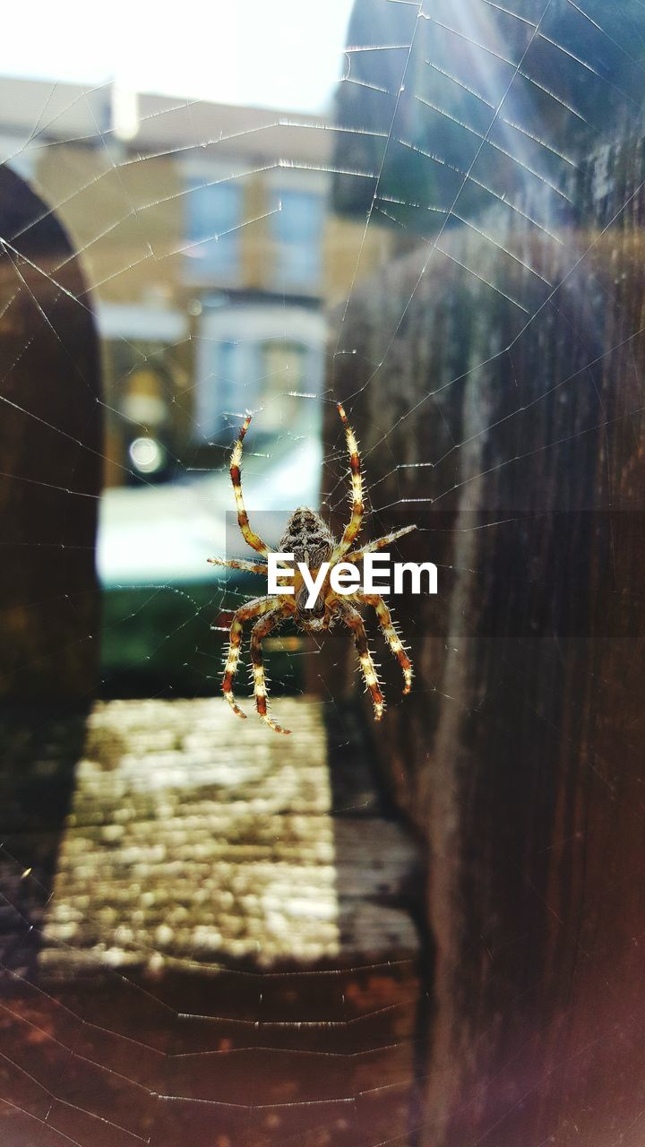 insect, spider web, animal themes, invertebrate, arachnid, spider, animal, animals in the wild, arthropod, animal wildlife, one animal, close-up, fragility, selective focus, focus on foreground, zoology, nature, day, outdoors, no people