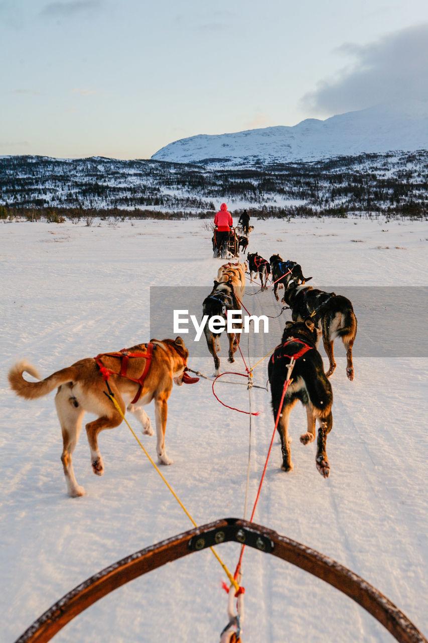Dogsledding on snowy landscape against sky