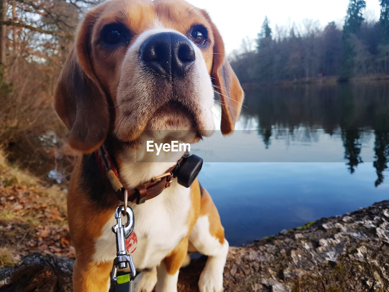 dog, pets, domestic animals, one animal, animal themes, mammal, outdoors, pet collar, focus on foreground, day, close-up, nature, no people, water, lake, tree, sky