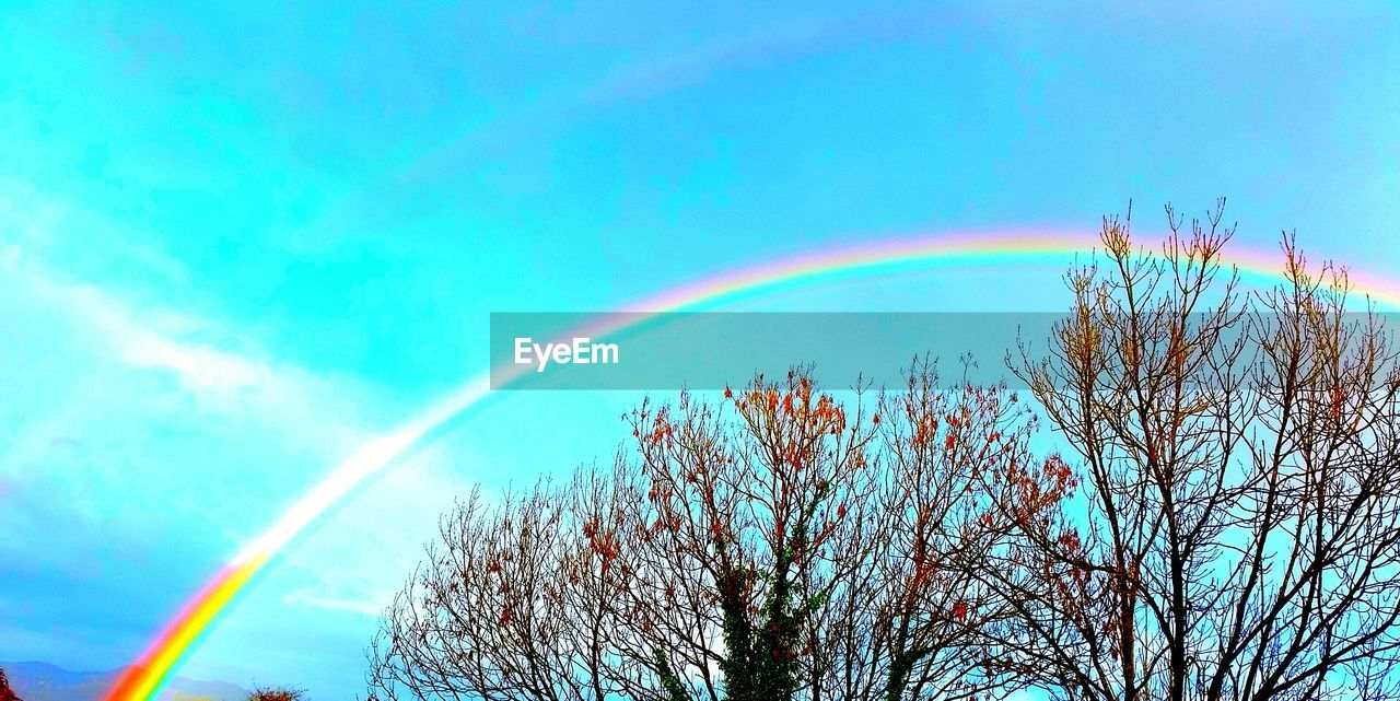 rainbow, double rainbow, nature, tree, beauty in nature, day, no people, outdoors, multi colored, scenics, blue, sky, low angle view, bare tree, vapor trail, contrail