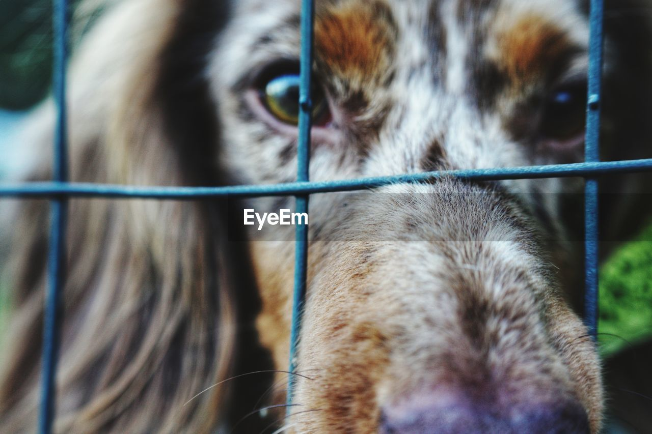 mammal, animal themes, one animal, domestic, domestic animals, pets, animal, vertebrate, canine, dog, animal body part, close-up, animal head, no people, focus on foreground, day, looking away, looking, portrait, outdoors, animal eye, whisker, snout