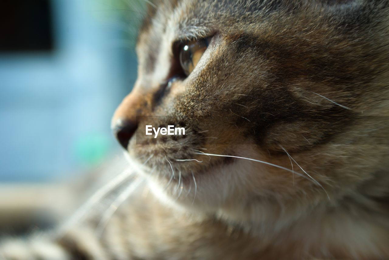 domestic cat, one animal, pets, animal themes, domestic animals, close-up, mammal, whisker, feline, no people, indoors, day