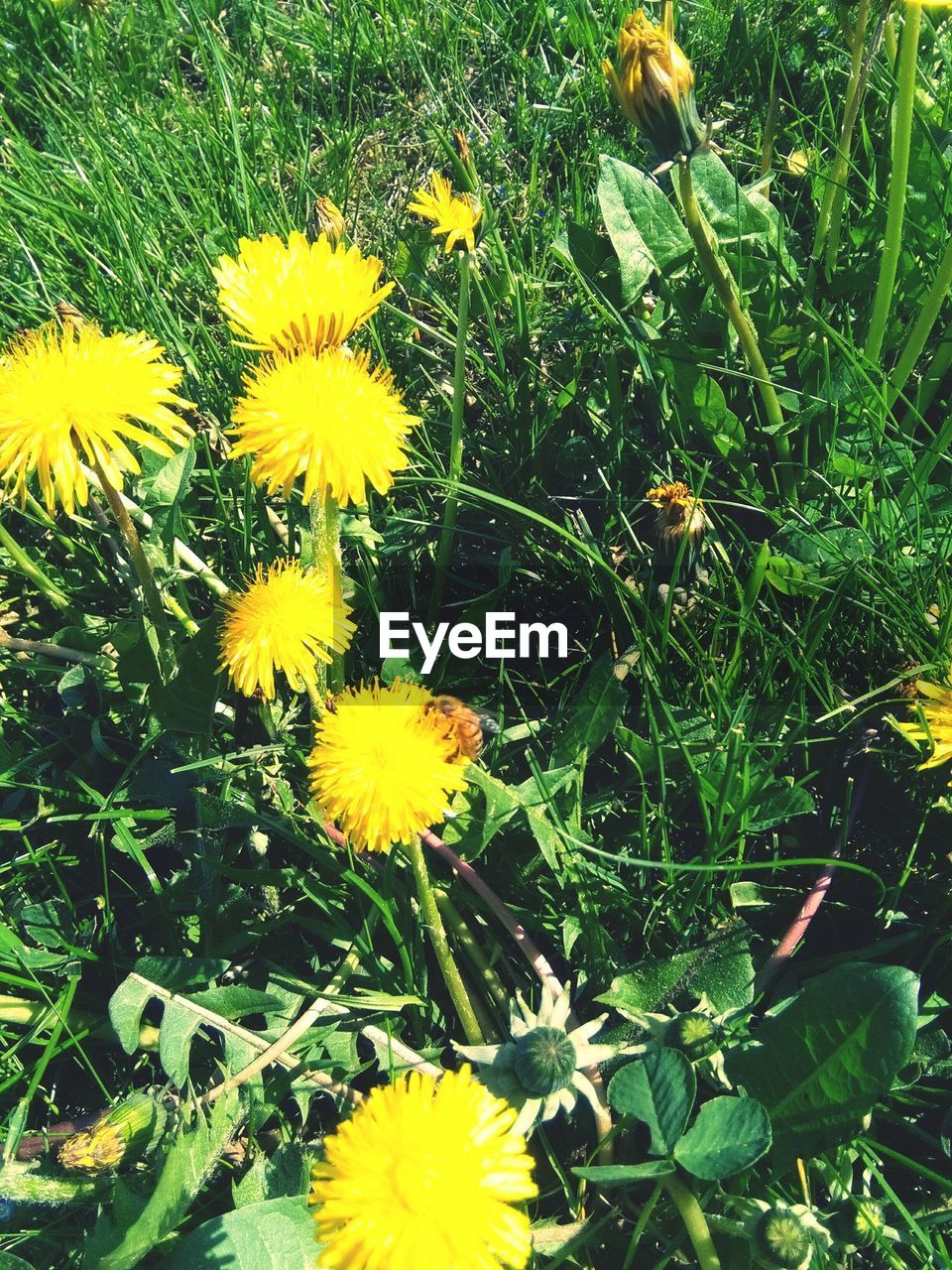flower, yellow, nature, growth, beauty in nature, freshness, petal, plant, fragility, spring, flower head, field, uncultivated, blooming, no people, summer, outdoors, day, close-up