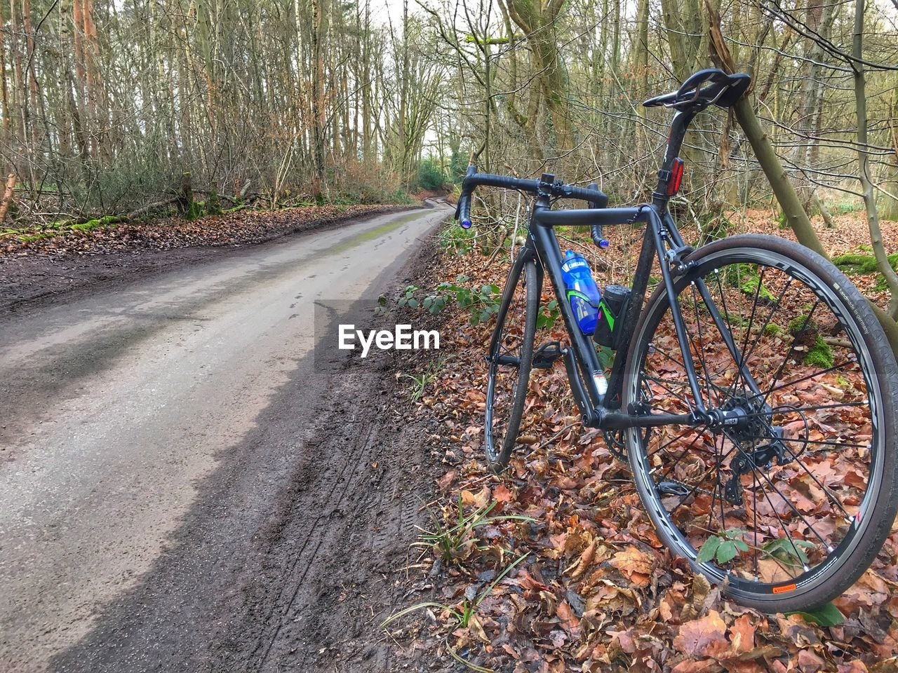 transportation, tree, bicycle, plant, land vehicle, mode of transportation, land, no people, stationary, day, nature, forest, autumn, tree trunk, leaf, trunk, outdoors, road, plant part, absence, change, wheel
