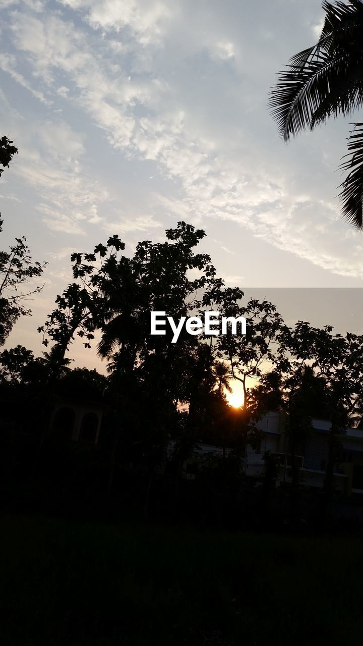 tree, sky, plant, cloud - sky, silhouette, nature, no people, sunset, beauty in nature, sun, built structure, architecture, growth, building exterior, tranquility, sunlight, outdoors, tranquil scene, scenics - nature, palm tree