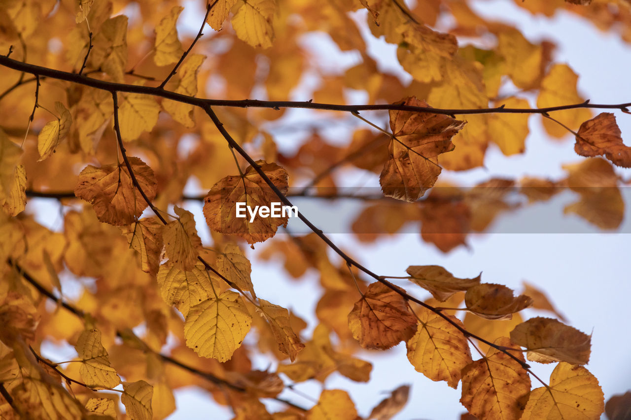 autumn, change, plant part, leaf, no people, plant, focus on foreground, leaves, tree, brown, dry, beauty in nature, close-up, nature, day, branch, tranquility, fragility, outdoors, vulnerability, autumn collection, natural condition, fall