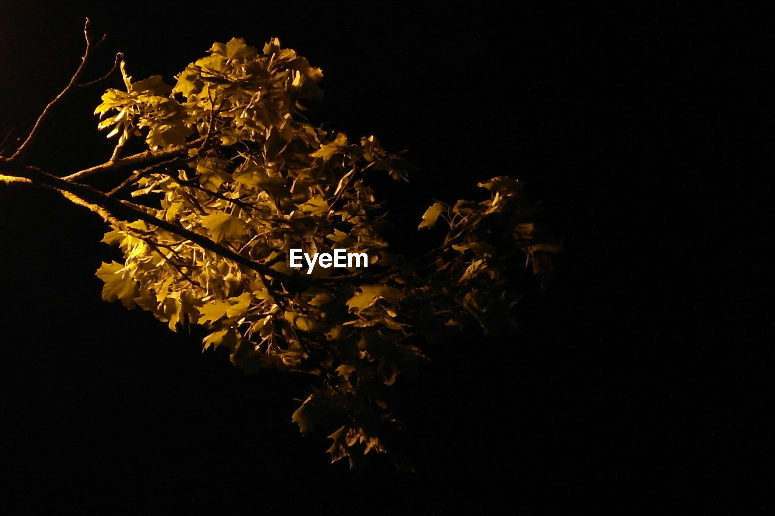 VIEW OF TREES AGAINST DARK SKY