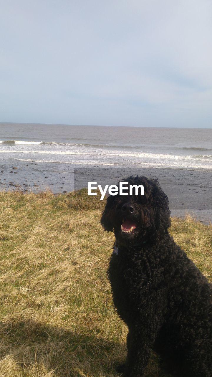 sea, one animal, animal themes, dog, canine, animal, land, domestic, sky, domestic animals, water, mammal, vertebrate, pets, horizon over water, nature, horizon, beach, no people