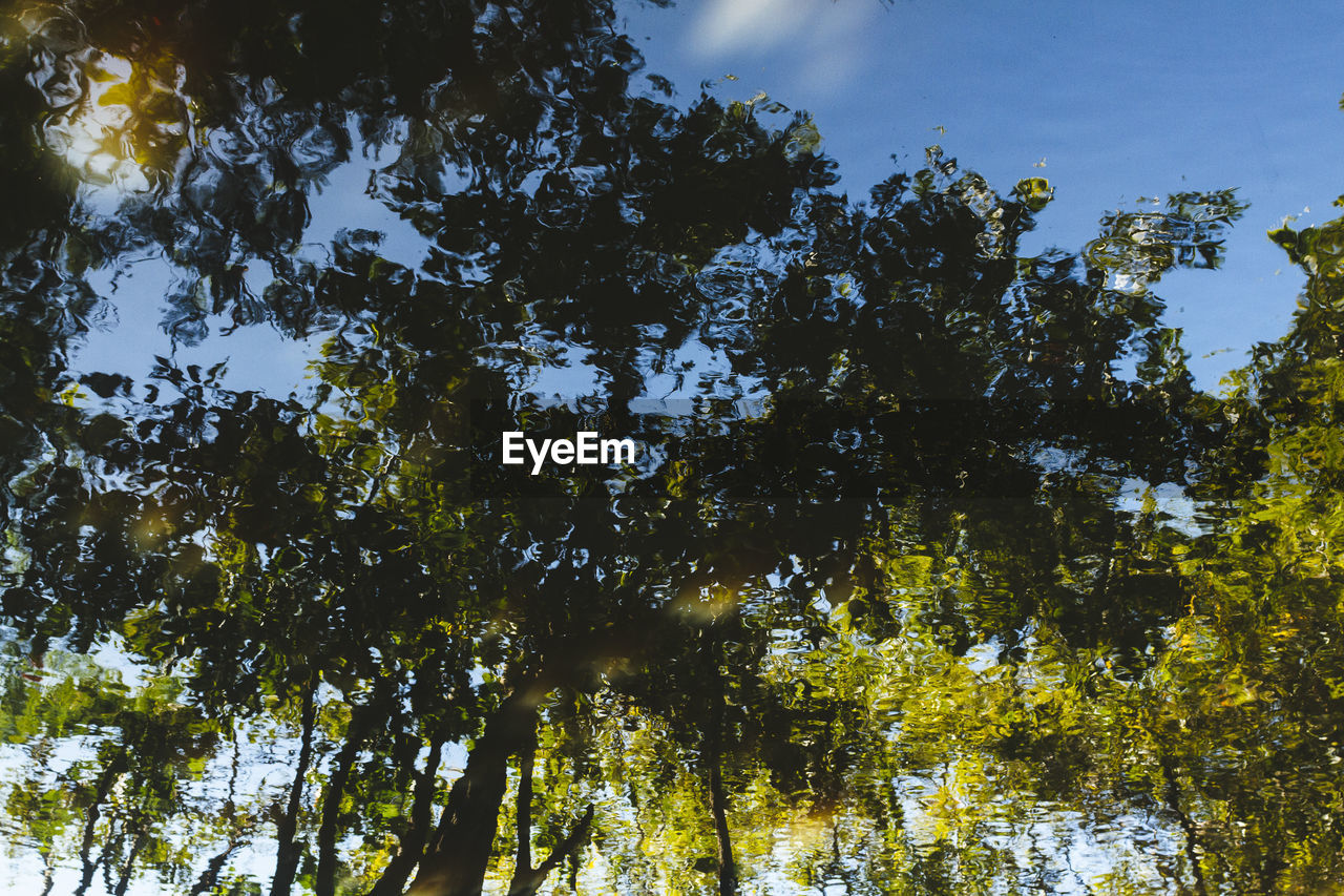 tree, low angle view, growth, nature, forest, outdoors, beauty in nature, sky, day, no people, tranquility