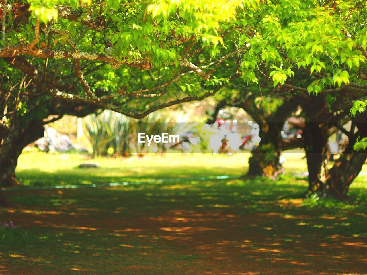 tree, nature, growth, branch, beauty in nature, green color, outdoors, grass, field, day, tranquility, tranquil scene, no people, park - man made space, scenics, freshness, close-up