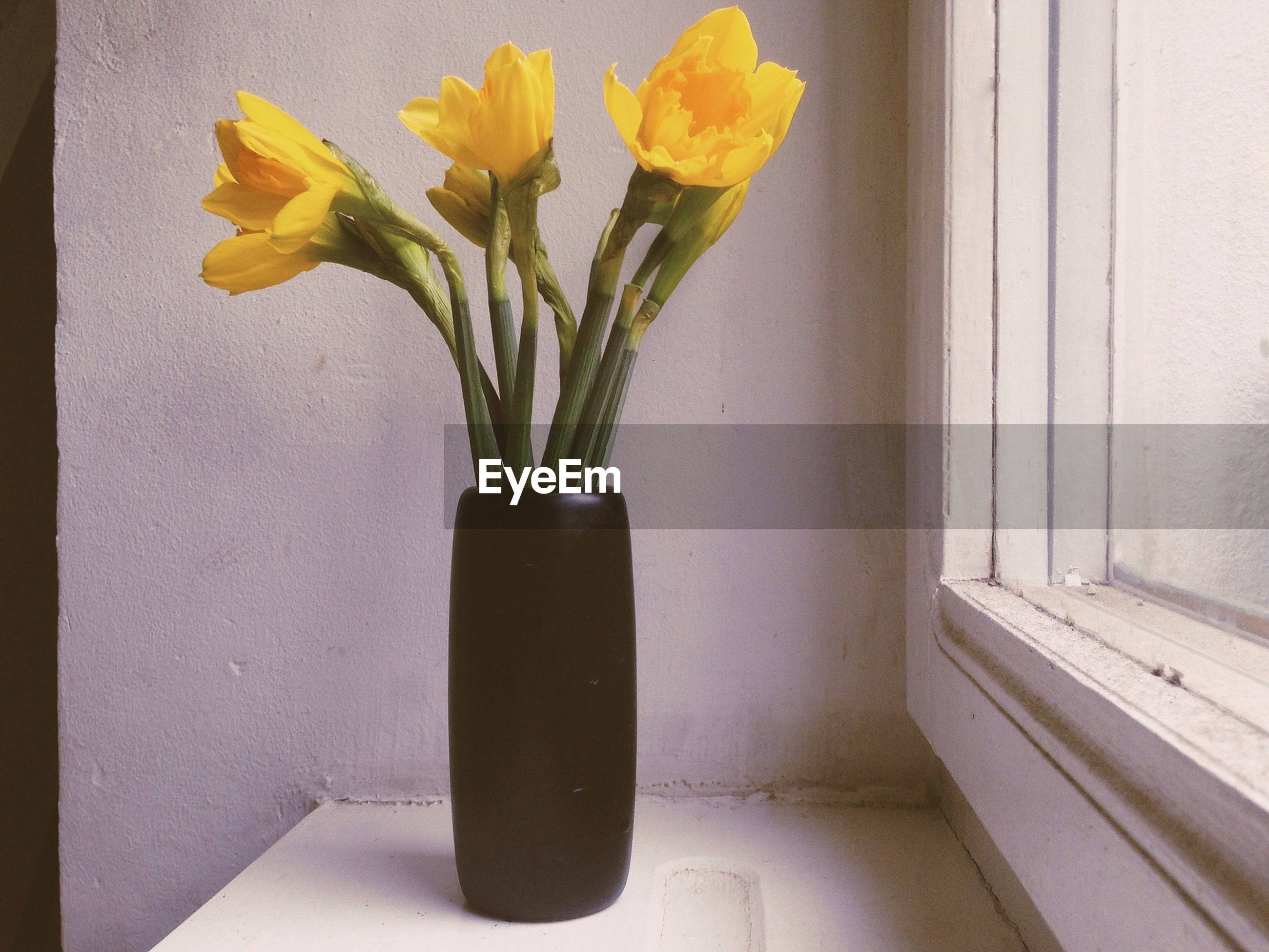 flower, indoors, vase, potted plant, fragility, plant, wall - building feature, petal, freshness, growth, leaf, home interior, flower head, yellow, table, flower arrangement, flower pot, wall, stem, close-up