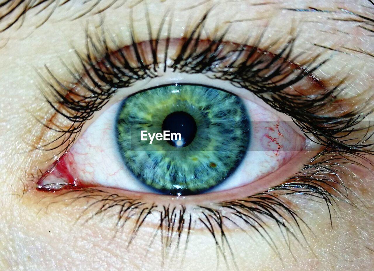 human eye, eyelash, human body part, real people, sensory perception, one person, eyeball, eyesight, iris - eye, close-up, macro, looking at camera, full frame, portrait, backgrounds, indoors, day, people