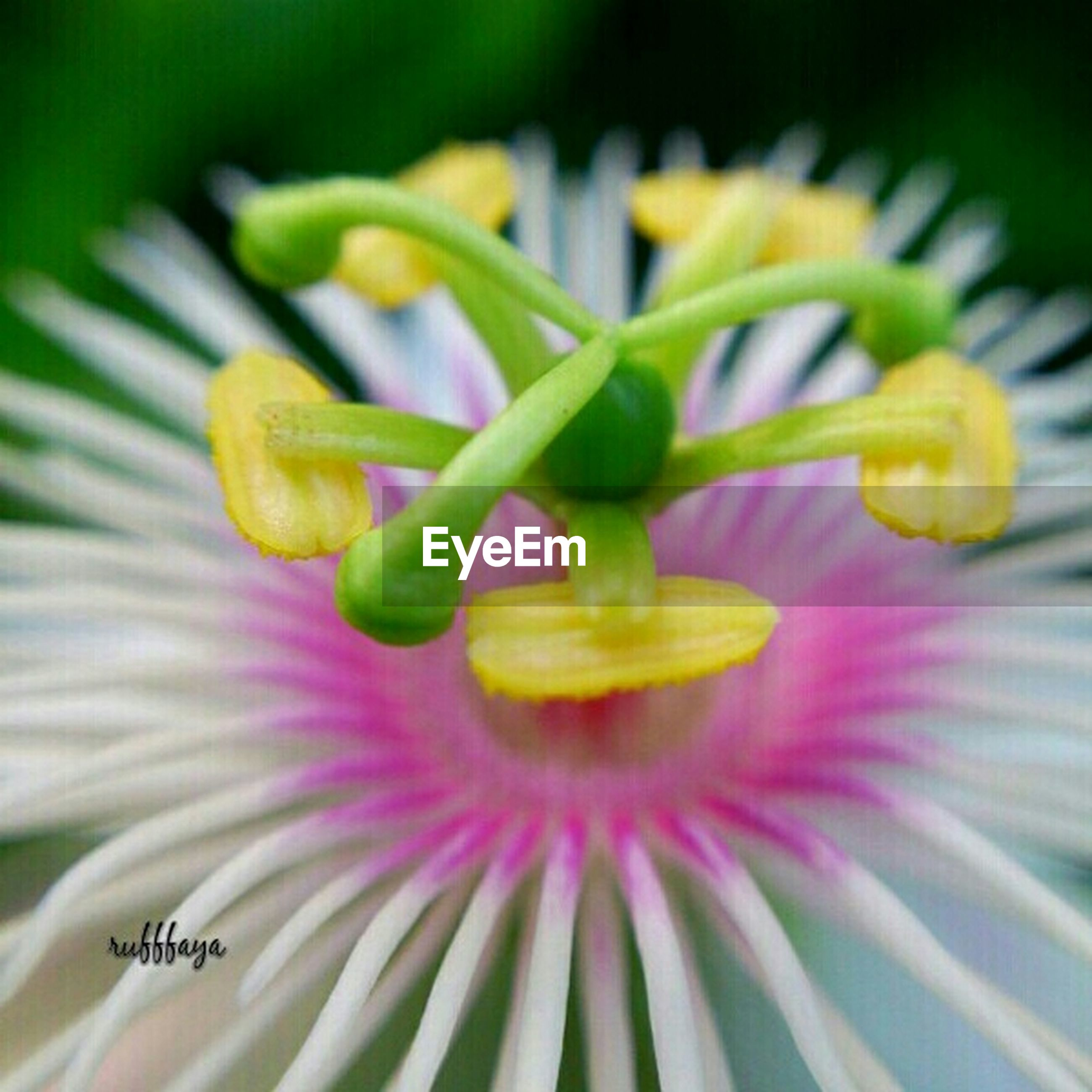 freshness, flower, close-up, yellow, green color, focus on foreground, petal, selective focus, growth, fragility, indoors, flower head, plant, nature, beauty in nature, no people, bud, stem, day, new life