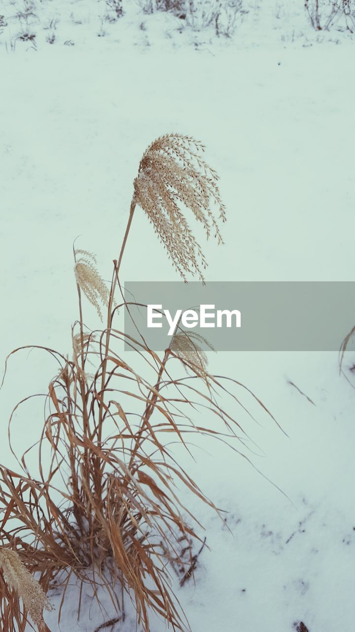 nature, winter, no people, beauty in nature, cold temperature, snow, plant, outdoors, tranquility, day, close-up, growth, water