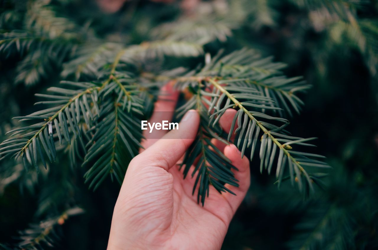 Close-Up Of Hand On Tree