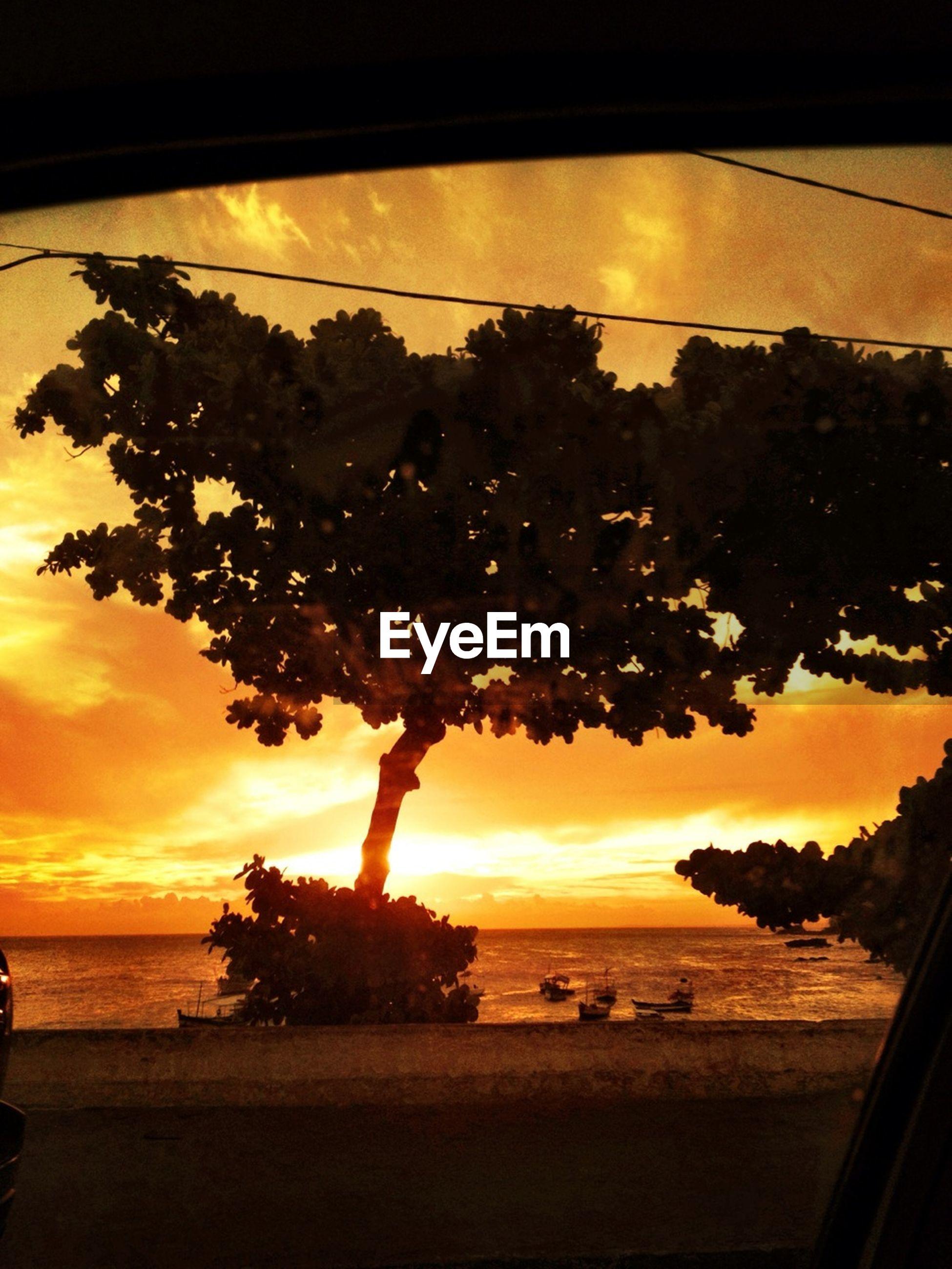 sunset, sea, beach, sky, horizon over water, sun, water, scenics, orange color, beauty in nature, tranquility, tranquil scene, silhouette, nature, shore, tree, cloud - sky, sunlight, idyllic, reflection