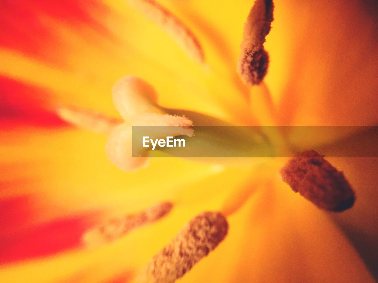 flower, petal, growth, flower head, freshness, fragility, beauty in nature, selective focus, nature, full frame, yellow, stamen, backgrounds, no people, blossom, close-up, pollen, soft focus, plant, springtime, day lily, blooming, outdoors, day
