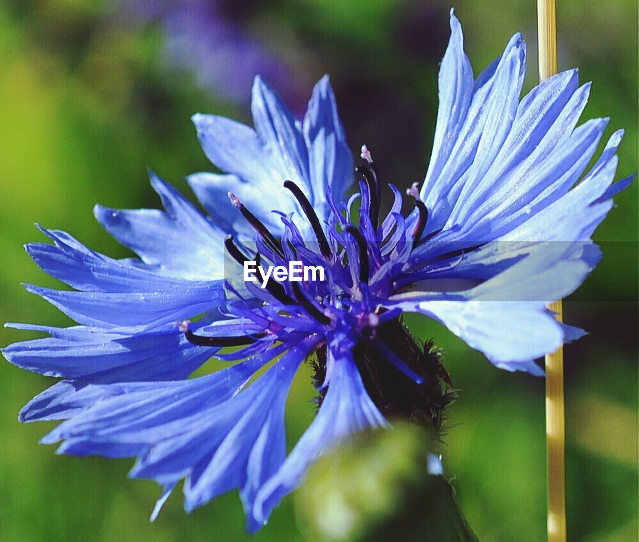 flower, nature, petal, fragility, beauty in nature, growth, purple, plant, freshness, no people, flower head, outdoors, blooming, close-up, day