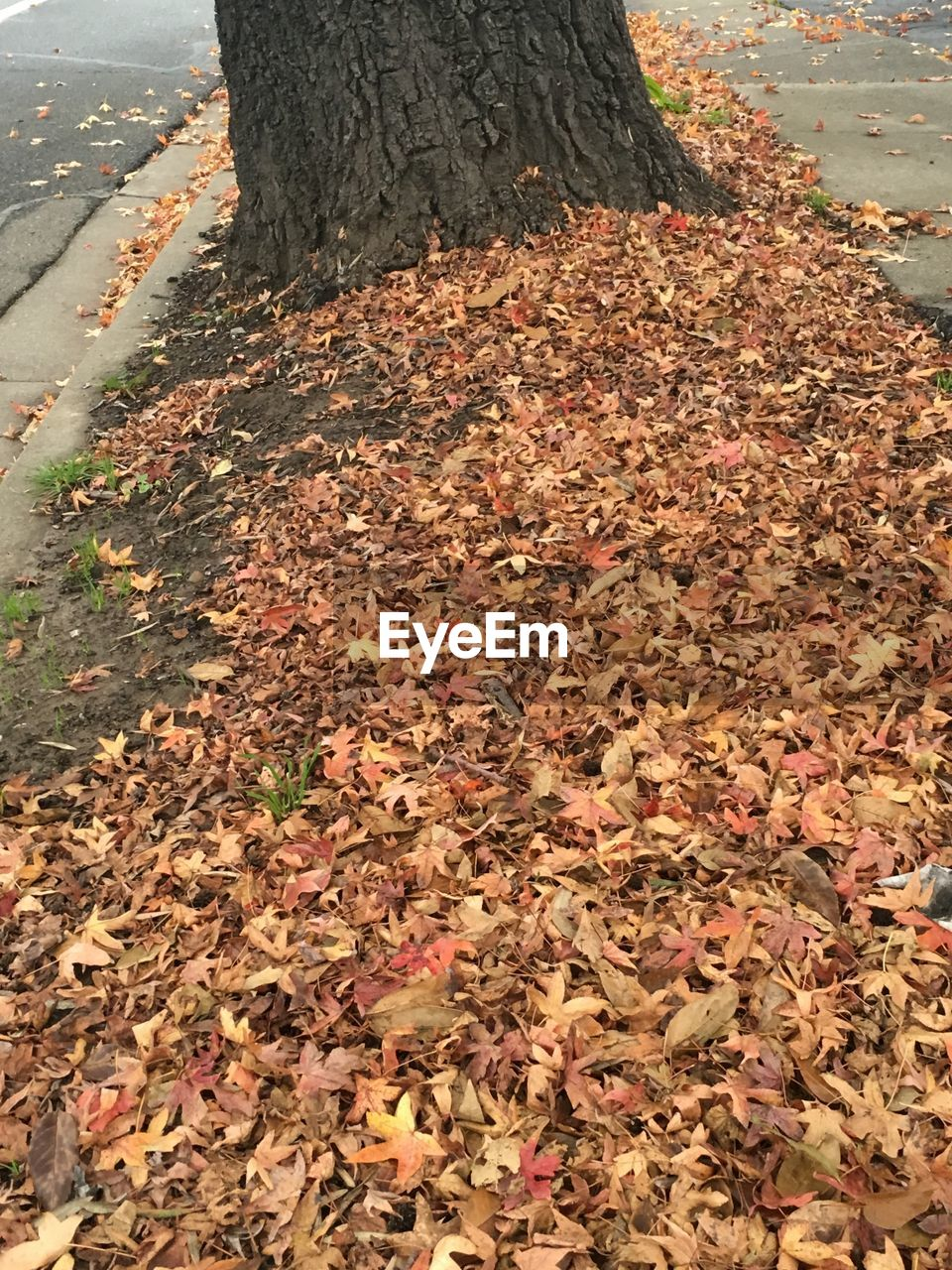 autumn, leaf, tree trunk, change, tree, nature, day, dry, fallen, outdoors, tranquility, no people, beauty in nature, close-up