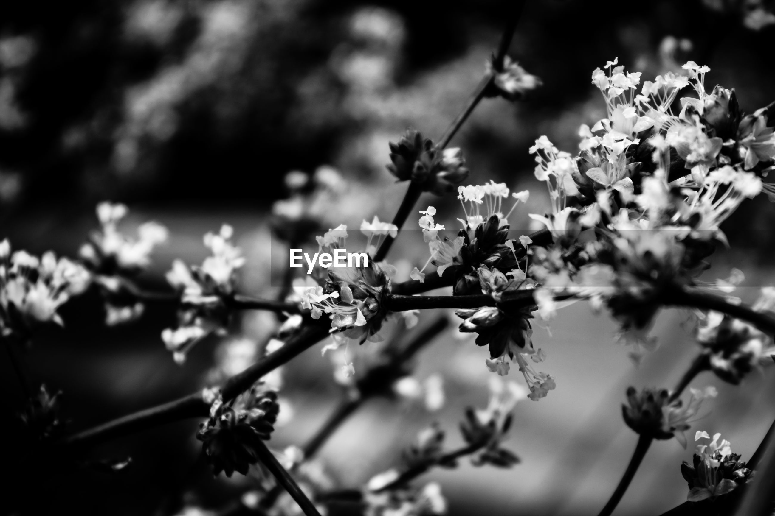 growth, nature, flower, beauty in nature, freshness, fragility, blossom, focus on foreground, springtime, close-up, tree, twig, no people, outdoors, branch, day, plum blossom, flower head, animal themes
