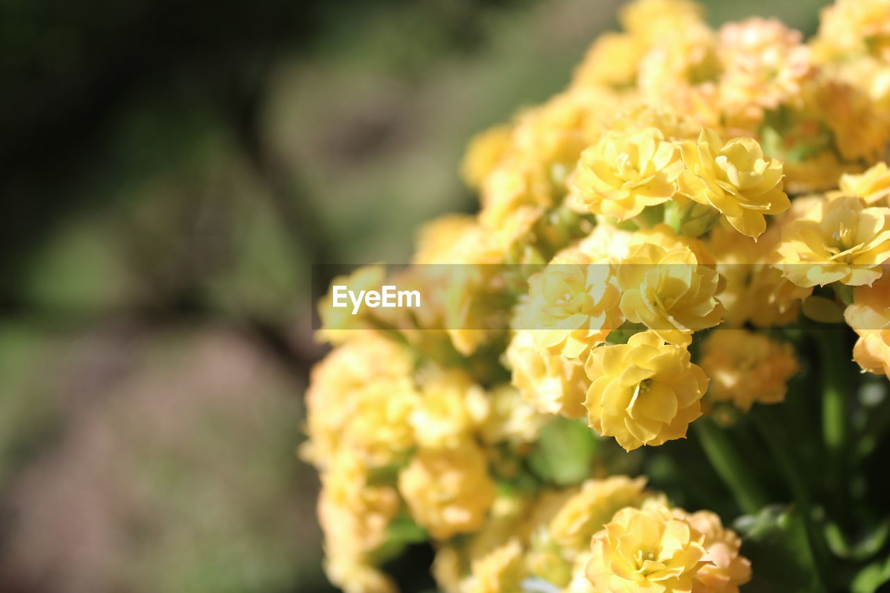 flower, petal, fragility, beauty in nature, nature, yellow, freshness, flower head, no people, plant, close-up, day, growth, focus on foreground, outdoors, blooming