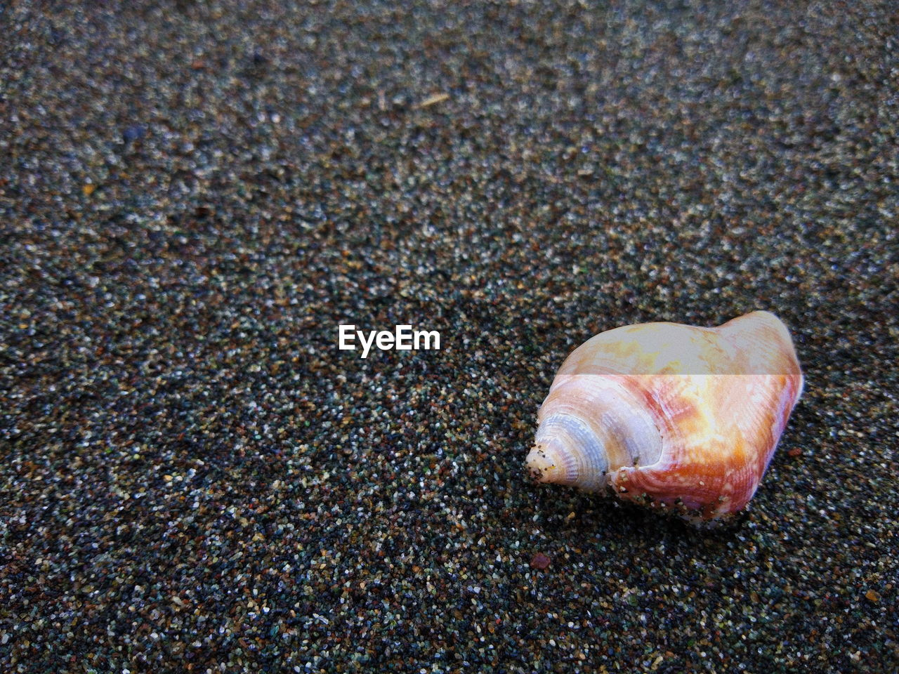 animal shell, beach, one animal, sand, animal themes, seashell, hermit crab, animals in the wild, no people, sea life, nature, outdoors, day, close-up, animal wildlife, sea