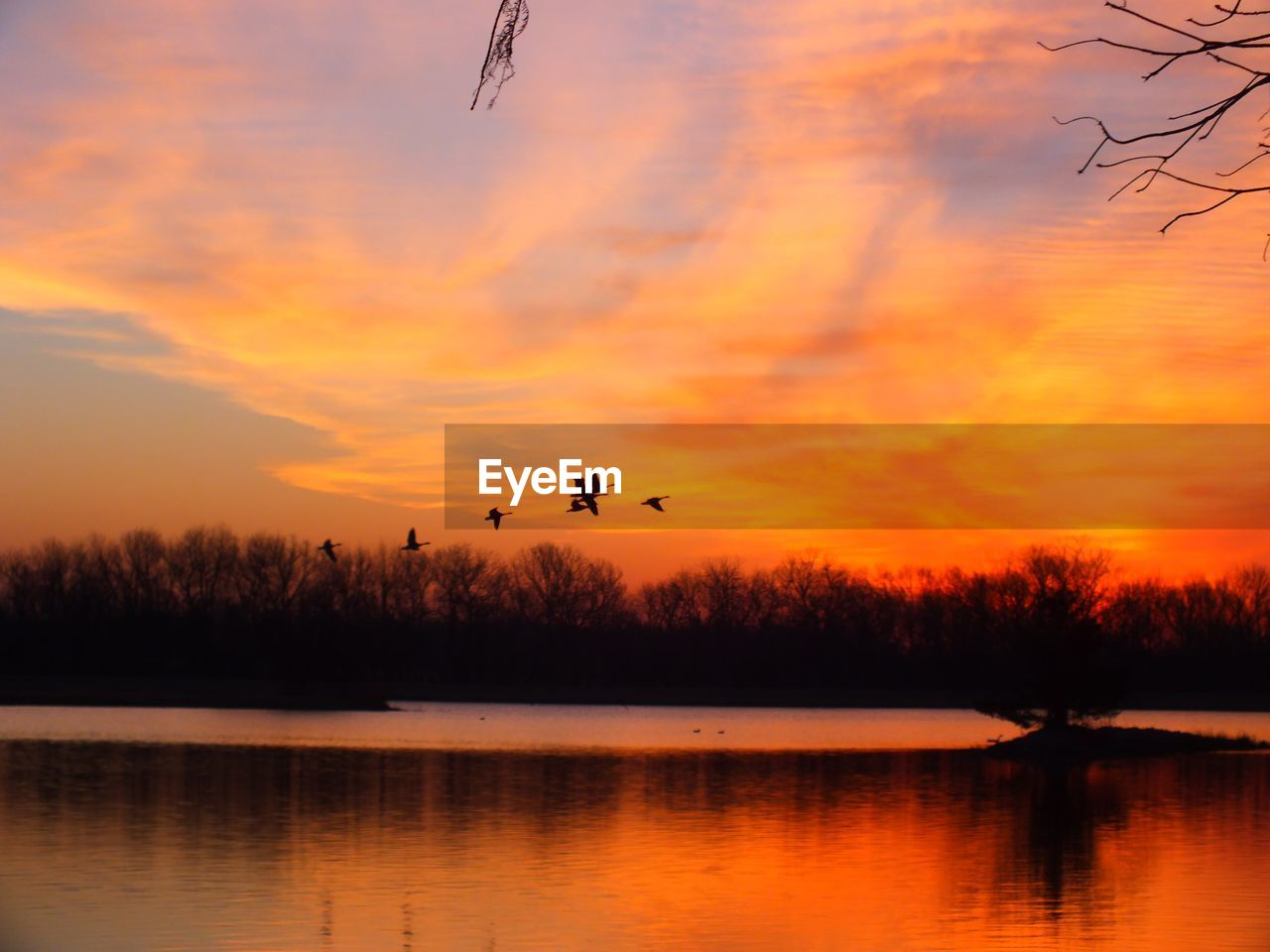 flying, sunset, animal themes, animals in the wild, mid-air, tree, orange color, nature, bird, lake, silhouette, reflection, sky, beauty in nature, one animal, animal wildlife, water, tranquil scene, scenics, outdoors, waterfront, no people, bare tree, spread wings, day